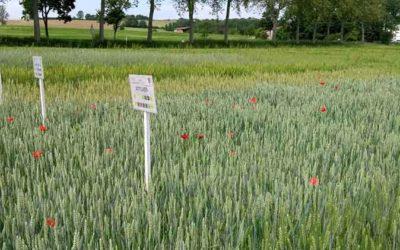 Visite des essais Bio Arvalis à Salvagnac (Tarn)