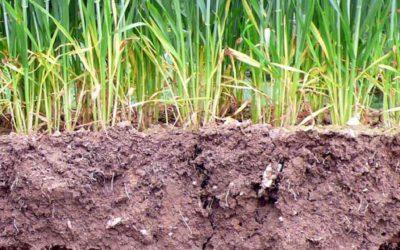 L'agriculture de conservation, kezako ?