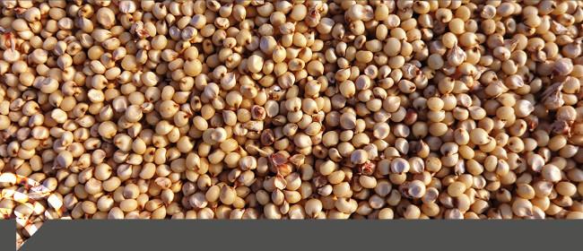 Évolution de la règlementation BIO, fin des autorisations générales pour les semences non traitées.