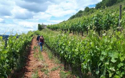 Deux viticulteurs certifiés HVE